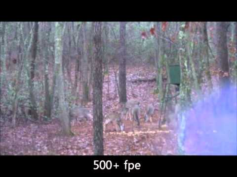 Deer Hunting with a Big Bore Air Rifle