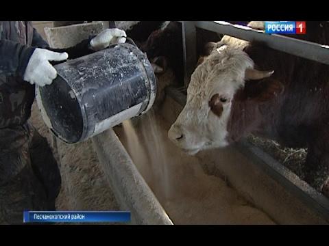 В Ростовской области развиваются семейные фермерские хозяйства