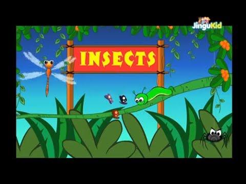 Learn About Insects   Nursery Rhymes   Preschool   Kids   Kindergarten