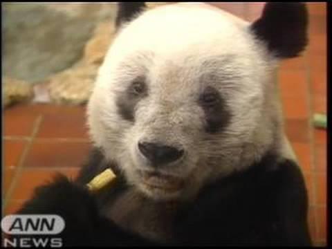 上野動物園に来年 再び「パンダ」のつがい(10/02/12)
