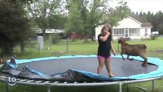Animals Jumping on Trampolines