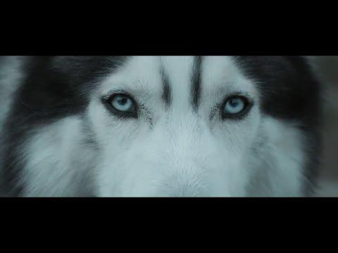 Hardwell Feat. Jonathan Mendelsohn - Echo (official Music Video) video