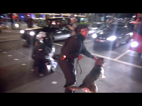 police dog attack, million mask march, london 05/11/14