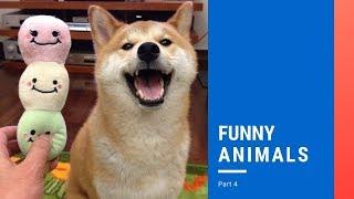 FUNNY ANIMALS   PART 4