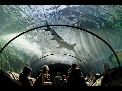 Sydney Sea Life Aquarium and Zoo! One of must visit places in the world