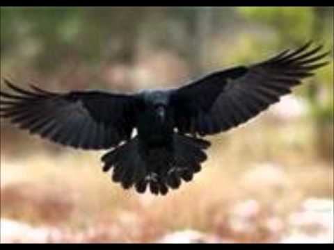 Melissa Etheridge - The Shadow Of A Black Crow