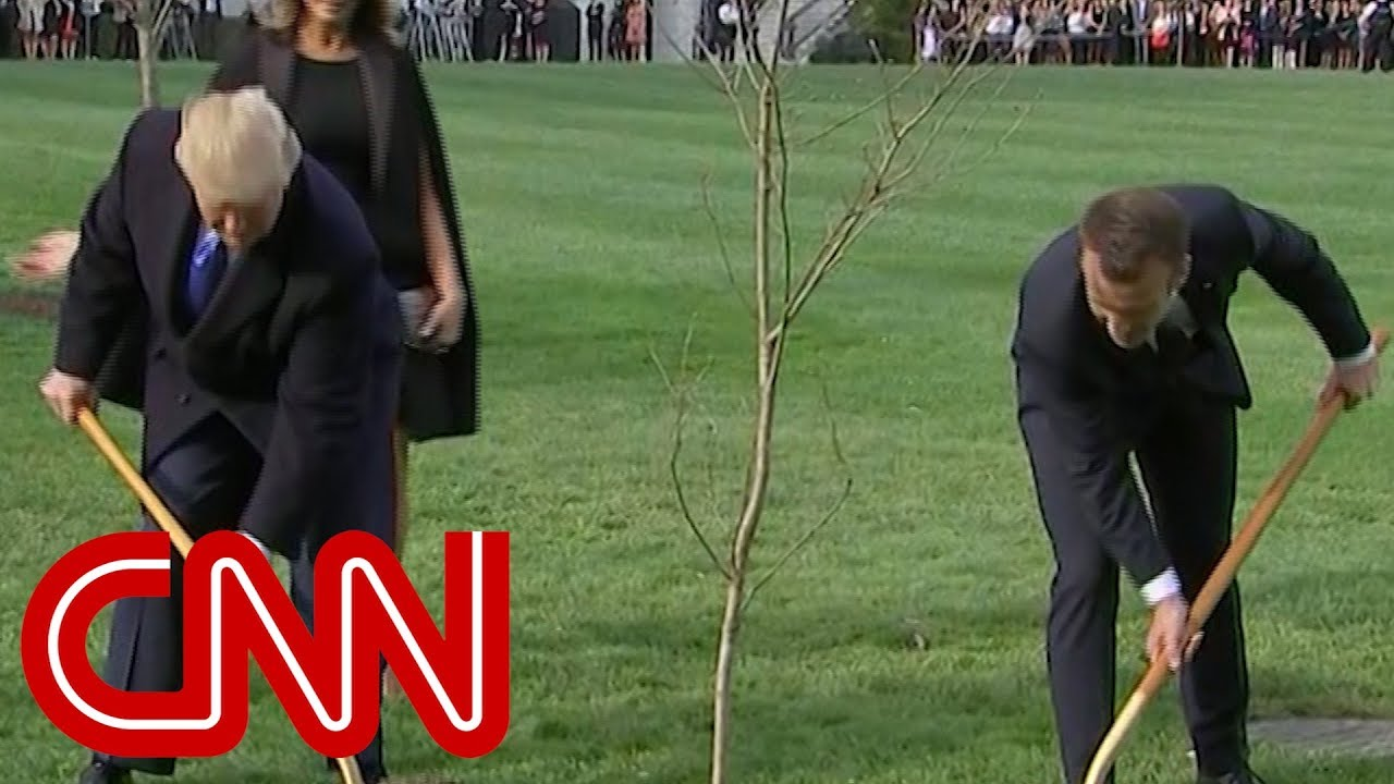 Trump and Macron's tree went missing, what happened?