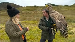 The Golden Eagle.  Scotland. BBC Countryfile