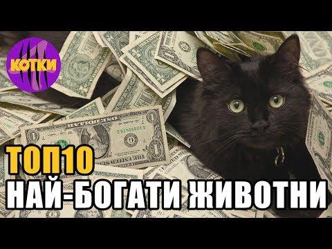 Топ 10 най-богатите домашни любимци на света