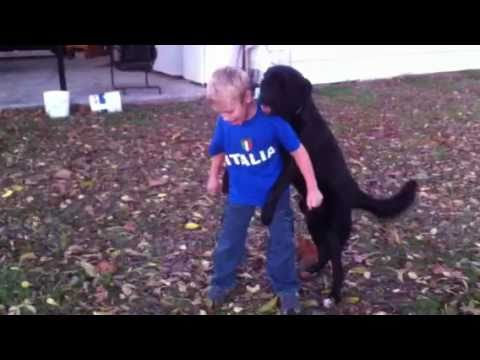 Kid gets owned by dog