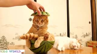 Chú mèo con - nhạc thiếu nhi sôi động cho bé ngoan