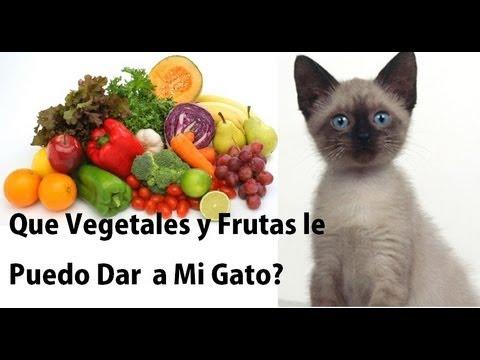Que Vegetales y Frutas Le Puedo Dar a Mi Gato y Cuales NO