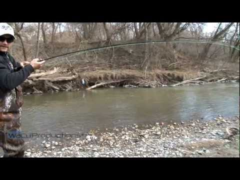 Oshawa Creek Rainbow Trout Fishing