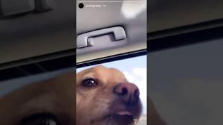 Ariana Grande Instagram Story - May 24, 2019