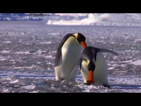 NOOT NOOT! - Pingu in Real Life