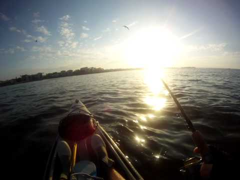 Yippee Kayak Fishing Guide Catch & Release Conservation for Sarasota Snook