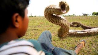 Wild Snake Attacks Boys During Digging Crab - Battle Snake Vs Boys