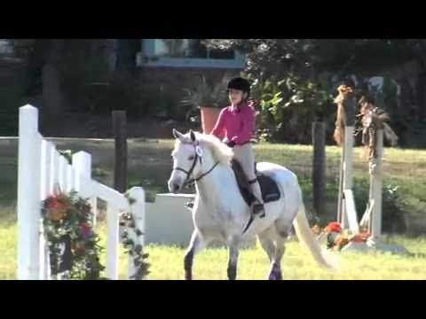 Greenfield's Whirlaway Hunter pony for sale