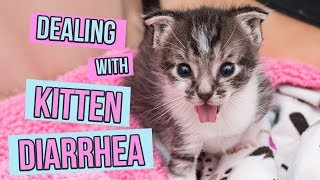 How to Deal With Kitten Diarrhea