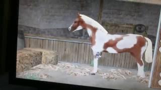 Прохождение игры лошадь моей мечты видео