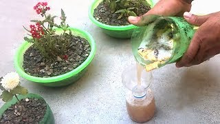 How to use liquid organic fertilizer for any plants | Homemade fertilizer