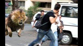 (Must watch) शेर आया.!! SHER AAYA PRANK | Pranks in India 2018
