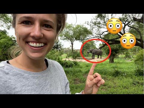 Ein Elefant überrascht uns in unserem Camp!! (NUR DEUTSCH!)