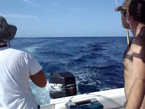 Offshore Fishing Sebastian Inlet catching Dolphin. (Part 1)