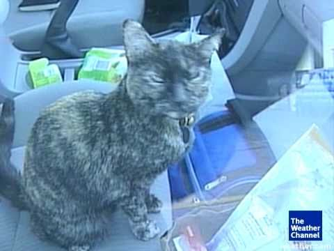 0 The Amazing Story of Millie the Cat