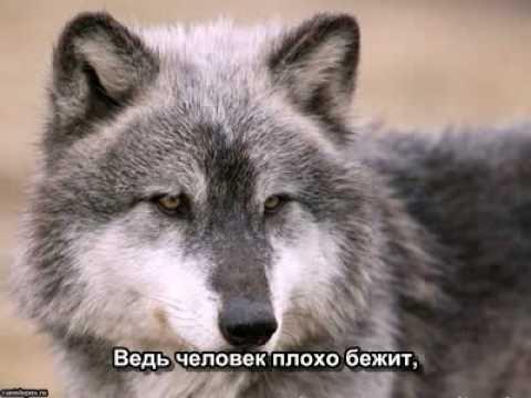 Маршал Александр - Волчонок