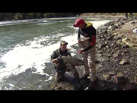 Chinook salmon river fishing, Niagara Whirlpool, Niagara River, ON