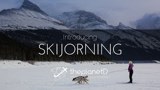 Skijoring, Wolf Dogs and Snowshoeing - Explore Alberta's winter with ThePlanetD