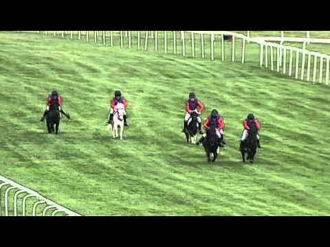 Royal Shetland Pony Race