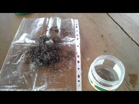 приманки для муравьев домашних условиях