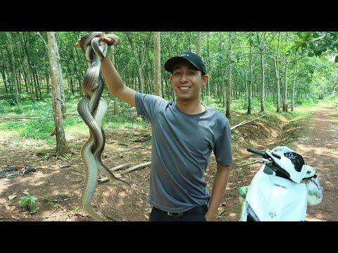 Lần đầu đặt bẫy rắn ẩm thực rắn hầm sã và gỏi rắn