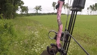 Chasse chevreuil à l'arc et à l'approche - France - Part 2 - Stalking Roe buck - Bow Hunting