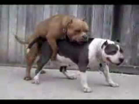 cojiendo con perros
