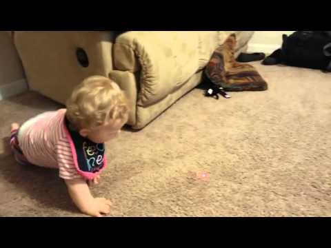 Baby Chasing a Laser Pointer