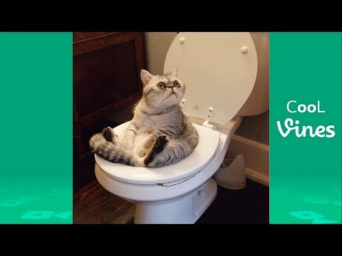 Try Not To Laugh Challenge - Funny Cat & Dog Vines compilation 2017
