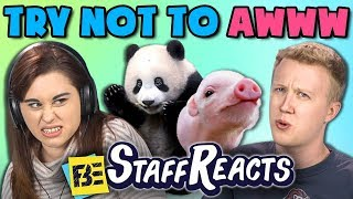 Download Lagu TRY NOT TO AWWW CHALLENGE #4 (ft. FBE Staff) Gratis STAFABAND