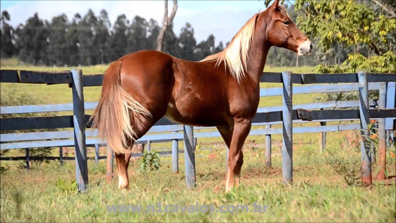 Fotos de cavalos quarto de milha para baixar