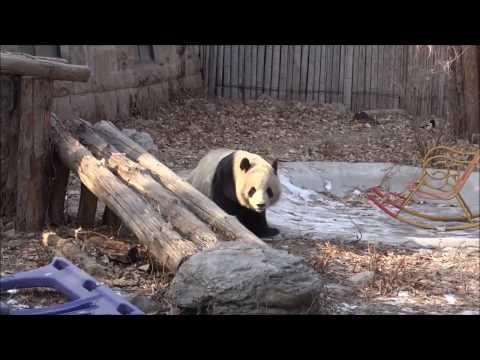 10-те най-впечатляващи зоопарка в света. Популярни атракции с уникален дух!