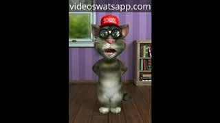 Chistes del Gato tom Cortos -2