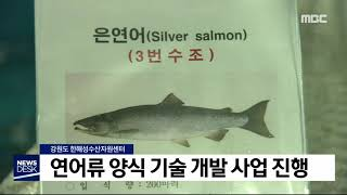 일데월투]연어류 양식 기술 개발 사업 진행