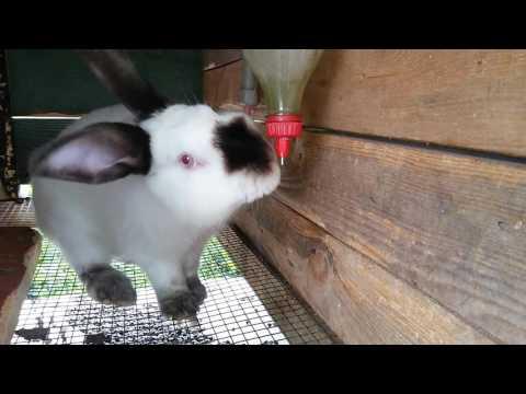 DIY - Поилки для кроликов своими руками