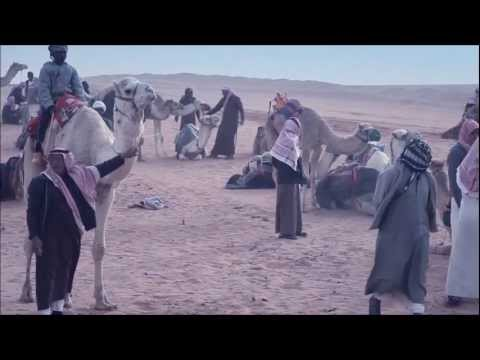 Camel Racing IN Saudi Arabia - Tabouk | Short Video | سباق الهجن بمنطقة تبوك