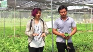 Ký sự tìm hiểu rau hữu cơ ( organic) tại vườn Nam An - Bình Dương