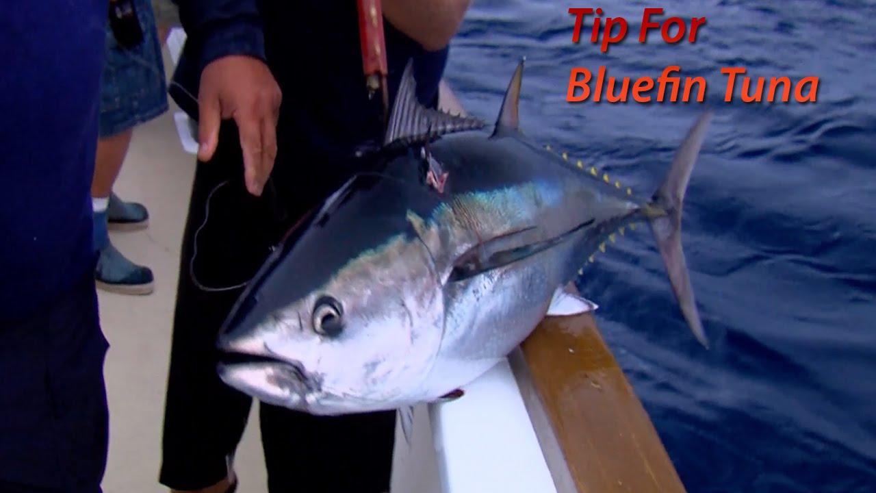 Bluefin tuna fishing tip youtube for Fishing for tuna
