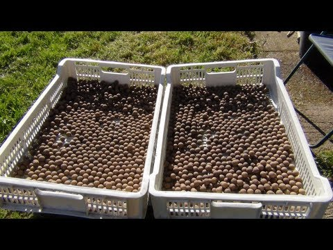 Bait Making - The Basics Carp fishing