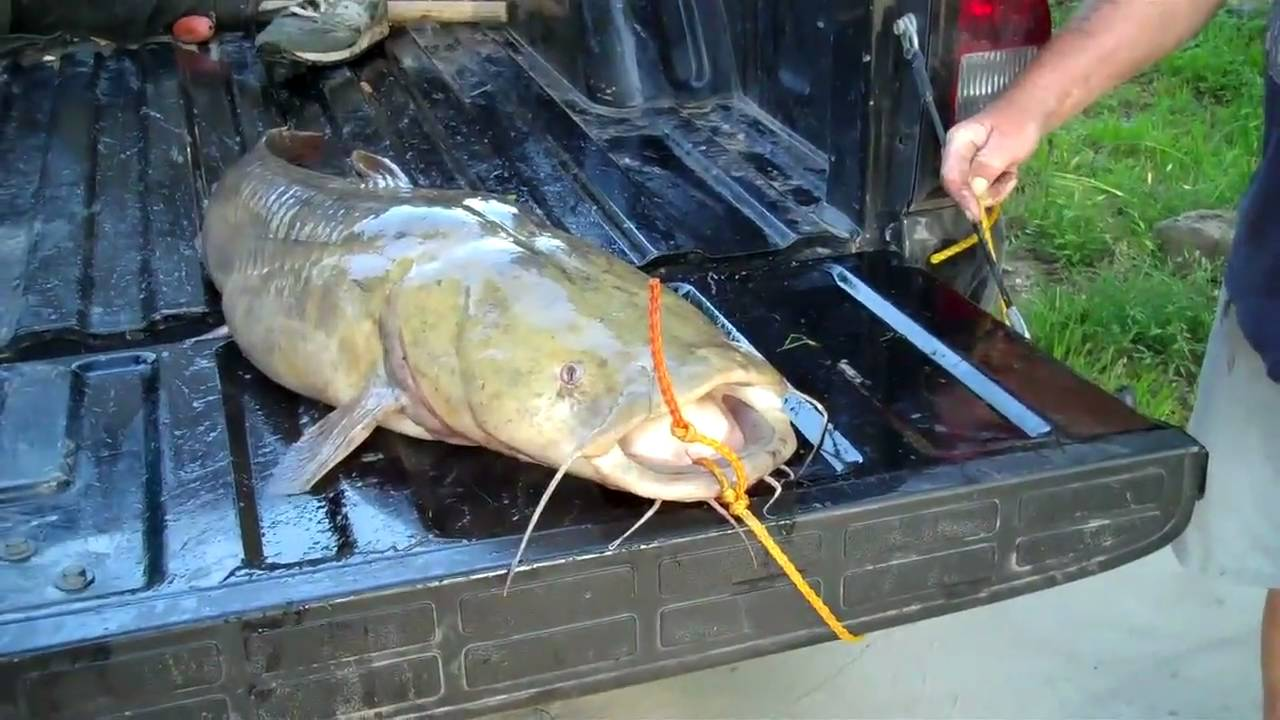 Just fishin 39 in menard texas san saba river catfish for Fishing license for disabled person